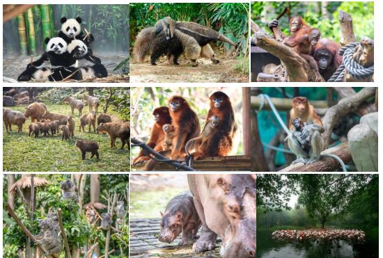 【浑南区   森林动物园】95元抢购森林动物园成人票+熊猫管套票!